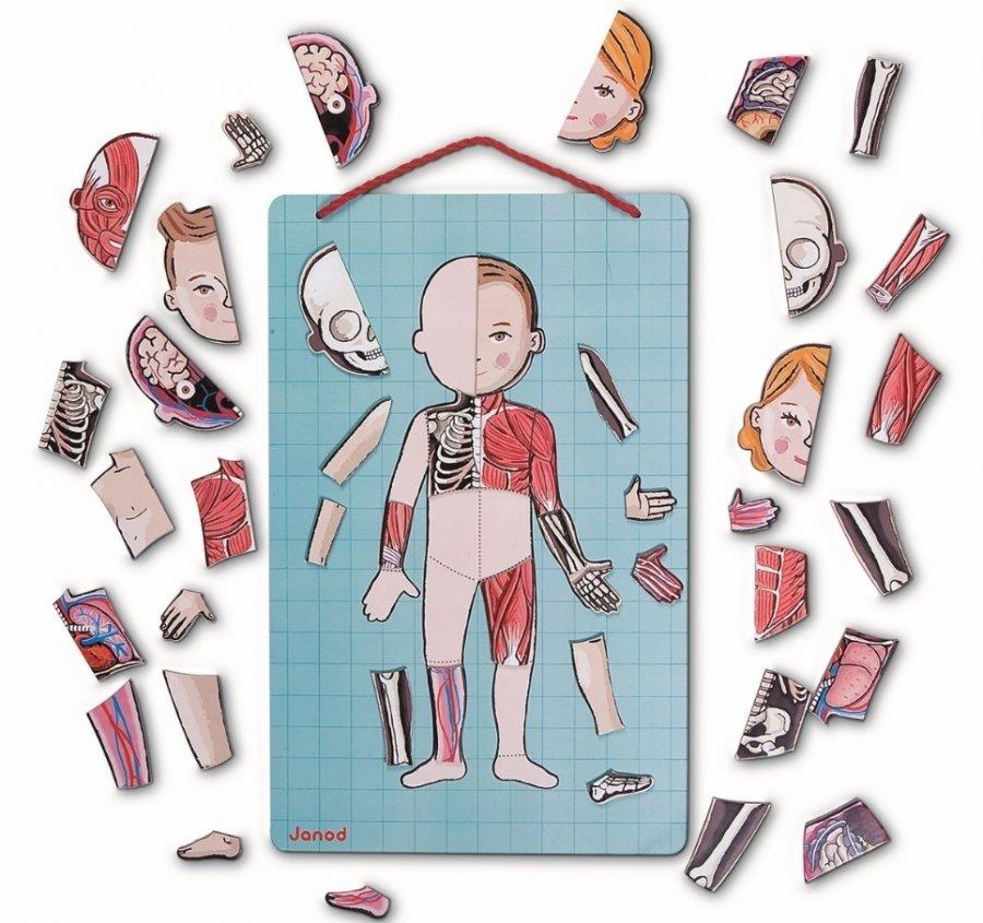 Магнитная анатомия человека клей временной фиксации для ткани купить